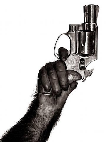 watson-monkey-with-gun1
